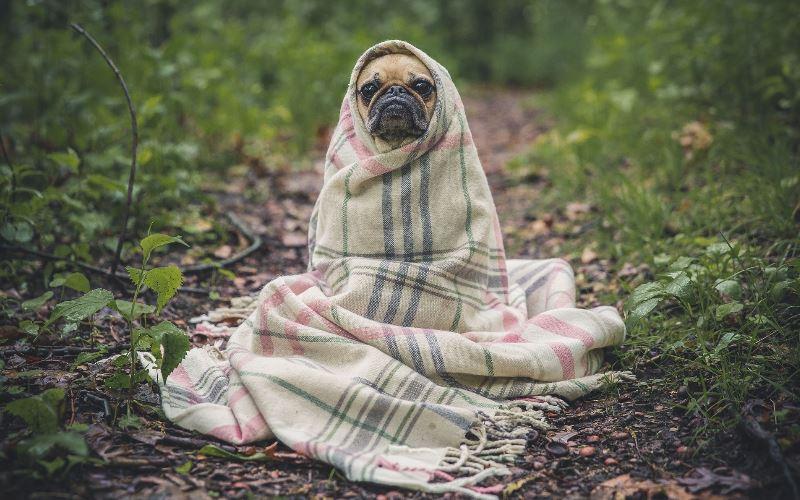 Seguro especiales para animales, perros y gatos